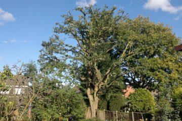 Tree topping in Kilkenny